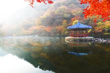 내장산 가을단풍