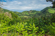 beautiful green wild landscape on the island of Sao Miguel, Azores, Portugal