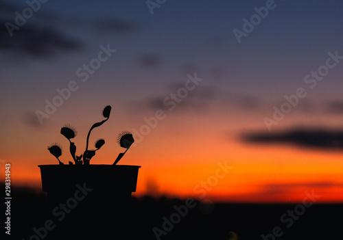 Young Venus Flytrap Against a Blue and Orange Sunset Fototapet