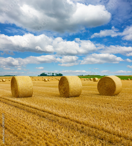 Obraz na plátně Yellow golden straw bales of hay in the stubble field, agricultural field under