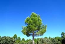 Pin Parasol Vert Et Ciel Bleu