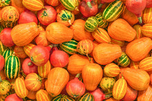 Pumpkins Background With Reali...
