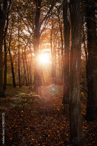 Foto auf Gartenposter Schokobraun Peaceful evening sunlight in a empty beech tree forest with autumn leaves and sunset glow. National Park Harz, Germany