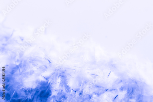 Fototapety, obrazy: Beautiful abstract purple and blue feathers frame on white background and colorful soft white pink feather portrait frame texture