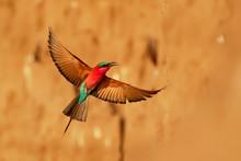 Beautiful Red Bird - Southern ...