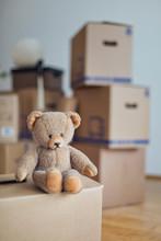 Teddy Bear On Cardboard Box In...
