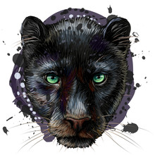 Panther. Artistic, Sketchy, Co...