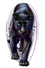 Panther. Artistic, Sketchy, Color Portrait Of A Walking Panther On A White Background In Watercolor Style.