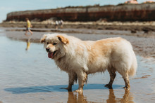 Cute Dog Standing In Water At The Beach Against Cliffs