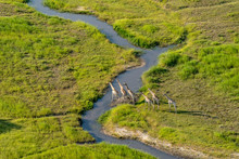 Aerial View Of A Group Of Gira...