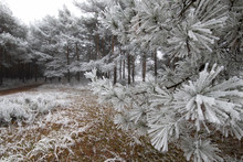 Icy Forest At Morning In Winter