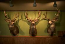 Deer Heads Line A Wall Of A Restaurant