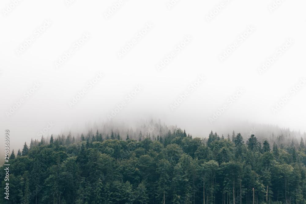 Fototapety, obrazy: fog in the forest