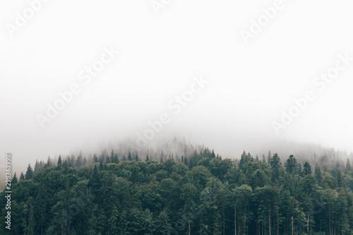 Montage in der Fensternische Weiß fog in the forest