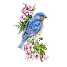 Bluebird Sitting On Blooming W...