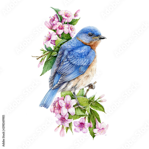 Bluebird sitting on blooming weigela pink bush watercolor illustration Tapéta, Fotótapéta