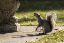 Cute Squirrel In A Aprk.