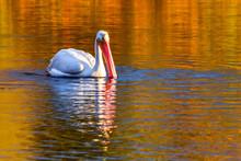 A White Pelican Is Enjoying Su...