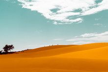 Silhouettes On Sand Dunes Of V...