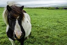 Pony In Ireland