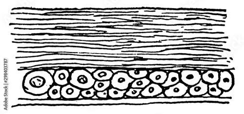 Canvastavla Insect Crust, vintage illustration.