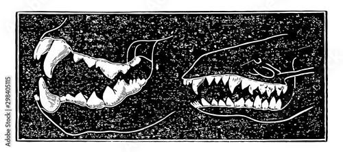 Fotografía  Comparing Teeth of Carnivora and Insectivora Animals, vintage illustration
