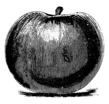 Baldwin/Bellflower Apple Vinta...