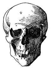 Skull Head Was A Design Found On The Shield Of Death Or Tombs And Often Represented Over Two Crossed Bones, Vintage Engraving.