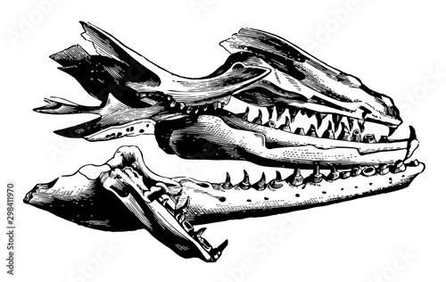 Mosasaurus Jaw, vintage illustration. Wallpaper Mural
