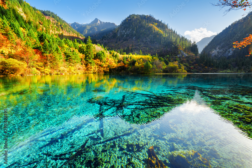 Fototapety, obrazy: Beautiful yellow autumn forest reflected in the Five Flower Lake