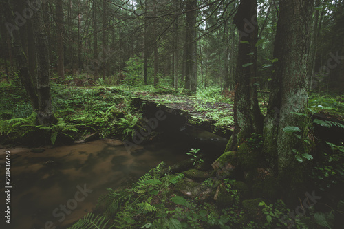 Fotografie, Obraz  Dark and moody edit of a little creek in a magical fantasy forest in bavaria