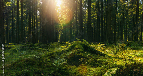 forest in autumn with bright sun shining through a Tree trunk