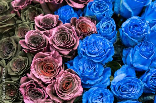 Papiers peints Cactus Bouquet of black, blue and burgundy roses