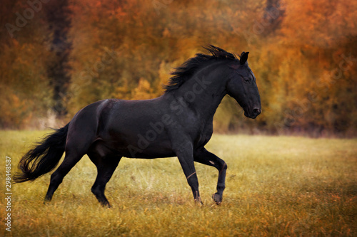 Foto op Canvas Paarden a portrait of black horse