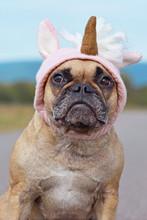Cute French Bulldog Dog Dresse...