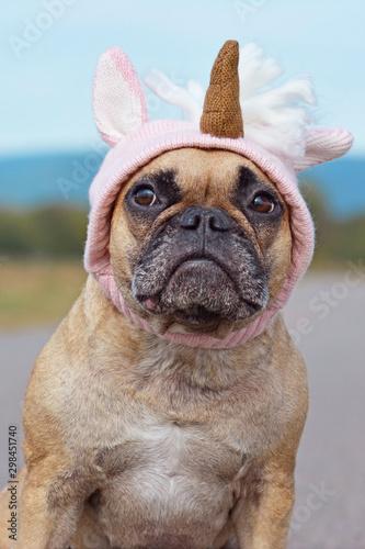 Cute French Bulldog dog dressed up with Halloween costume in shape of pink knitt Fototapeta
