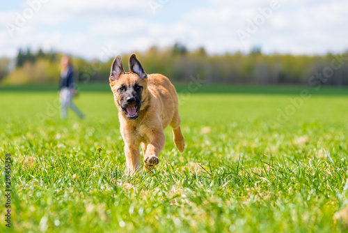 active mongrel dog running through the grass in the park Canvas Print