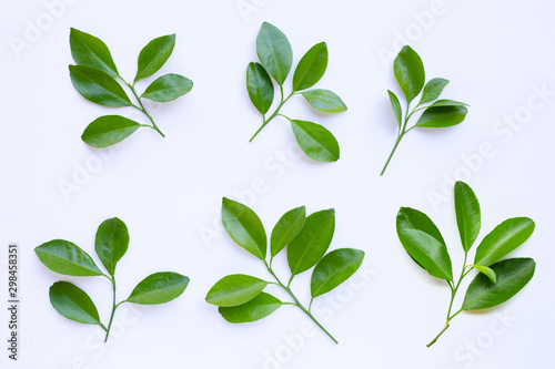 Fototapety, obrazy: Citrus leaves circle on a white background.
