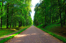 Long Sunny Alley In The Park Among Green Trees