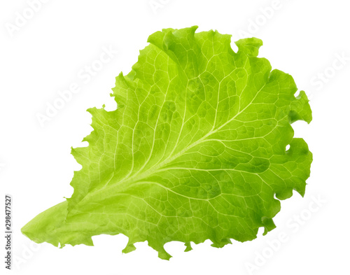 Obraz Green lettuce leaf isolated without shadow - fototapety do salonu