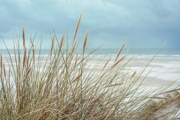 Fototapeta Morze Dünenlandschaft an der Nordseeküste