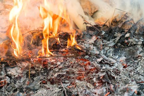 Canvastavla  Burning leaves