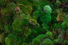 Moss Leaf Texture In Garden,abstract Nature Green Background.