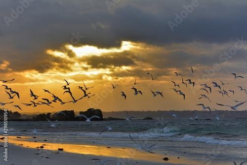 Coucher de soleil sur la mer en Bretagne. France Canvas Print