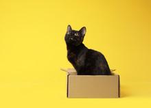 Cute Black Cat Sitting In Cardboard Box On Yellow Background
