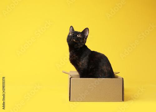 Cute black cat sitting in cardboard box on yellow background - 298513378