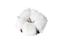 Beautiful Fluffy Cotton Flower...
