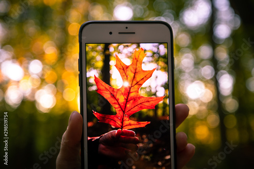 Photo A hand holds a mobile phone and shows off a photo of a red leaf at sunset on a beautiful autumn day in a vast forest on the East Coast of the United States