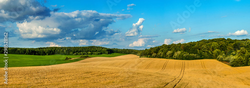 Foto op Aluminium Honing beautiful landscape panoramic view of wheat field, ears and yellow and green hills