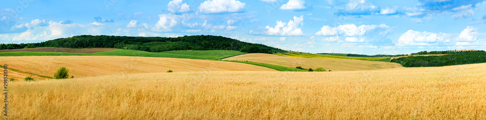 Fototapety, obrazy: beautiful landscape panoramic view of wheat field, ears and yellow and green hills